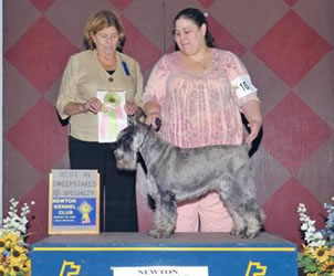 {Shawnee at almost 12 years old winning Veteran Sweepstakes.}