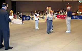 Zimmer At Akc National Obedience Invitational