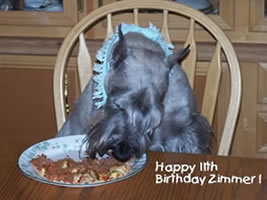 {Zimmer turns 11 years old}