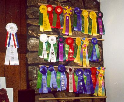 {Agility Ribbons - Aaron's accomplishments are on the first two rows and YD's on third row}