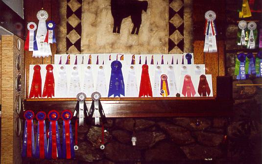 {Best of Breed and Group Placement ribbons}