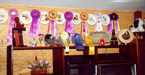 {Trophies and Ribbons - many earned in Canada}